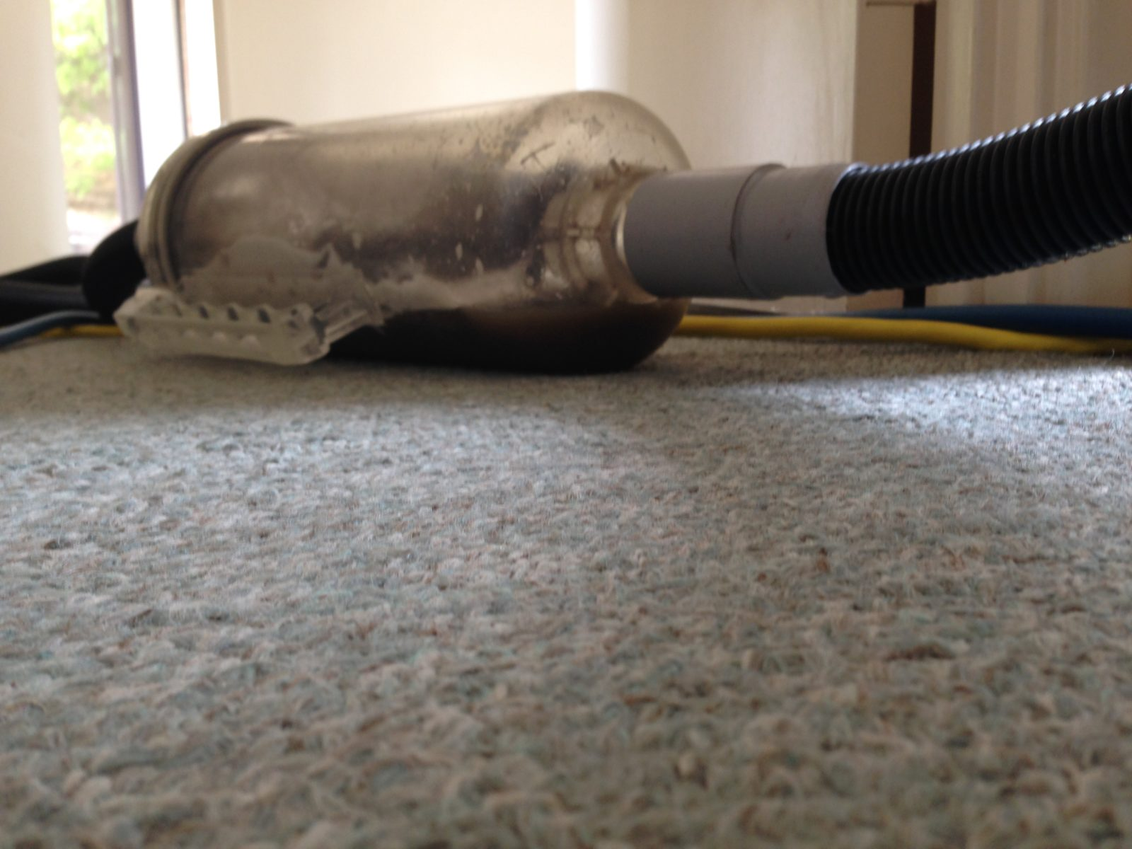 Carpet Cleaning Melville M Amp Co Professional Cleaning 100